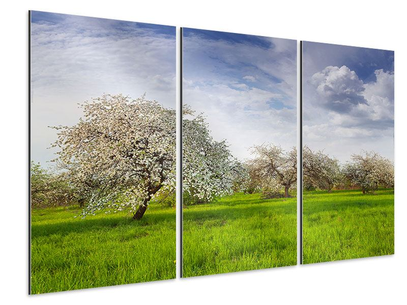 Aluminiumbild 3-teilig Apfelbaum-Garten