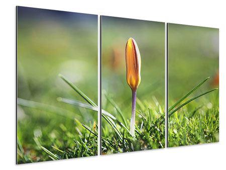 Aluminiumbild 3-teilig Die Blütenknospe
