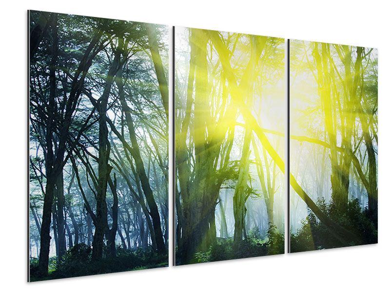 Aluminiumbild 3-teilig Sonnenstrahlen im Wald