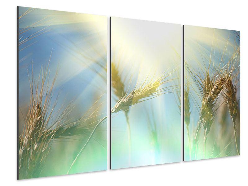 Aluminiumbild 3-teilig König des Getreides