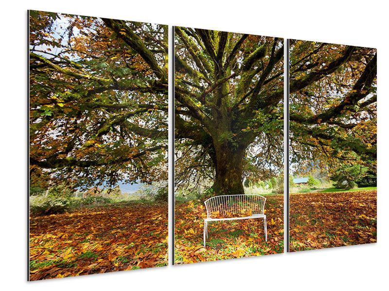Aluminiumbild 3-teilig Mein Lieblingsbaum