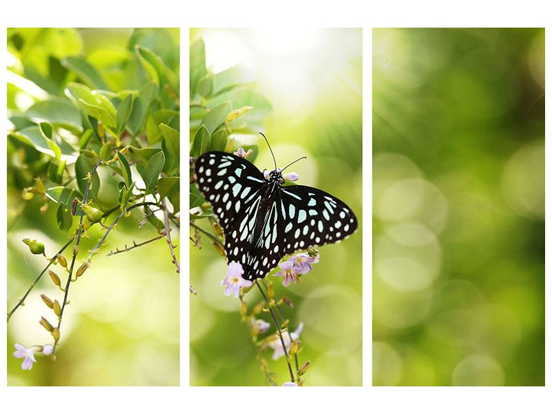 Aluminiumbild 3-teilig Papilio Schmetterling XXL