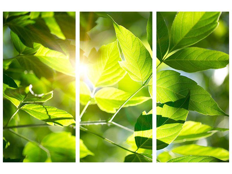 Aluminiumbild 3-teilig Es grünt so grün