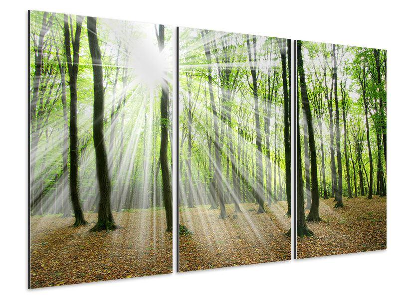 Aluminiumbild 3-teilig Magisches Licht in den Bäumen