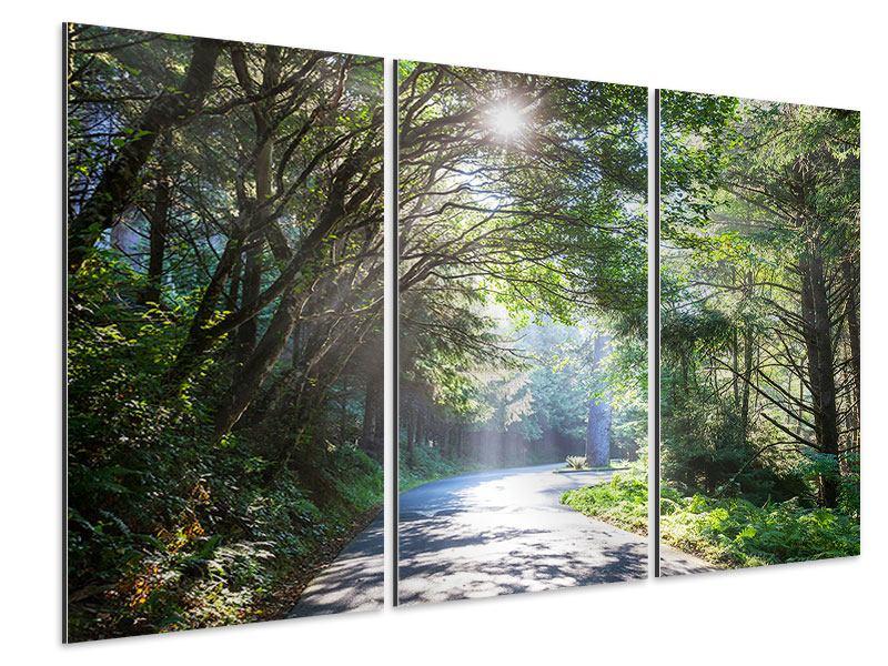 Aluminiumbild 3-teilig Sonniger Waldweg