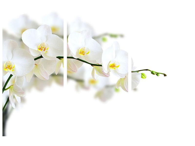 Aluminiumbild 3-teilig Weisse Orchideen