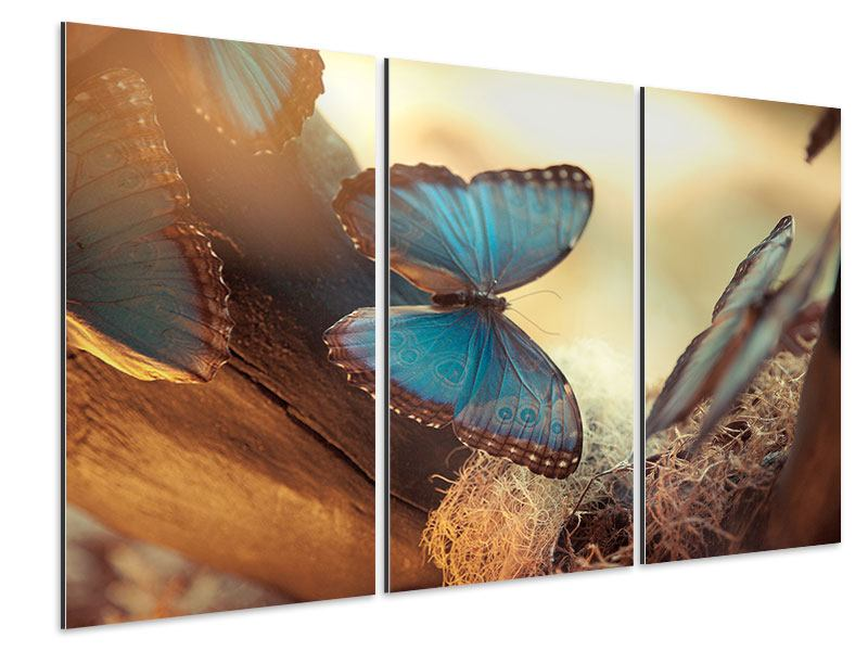 Aluminiumbild 3-teilig Schmetterlinge