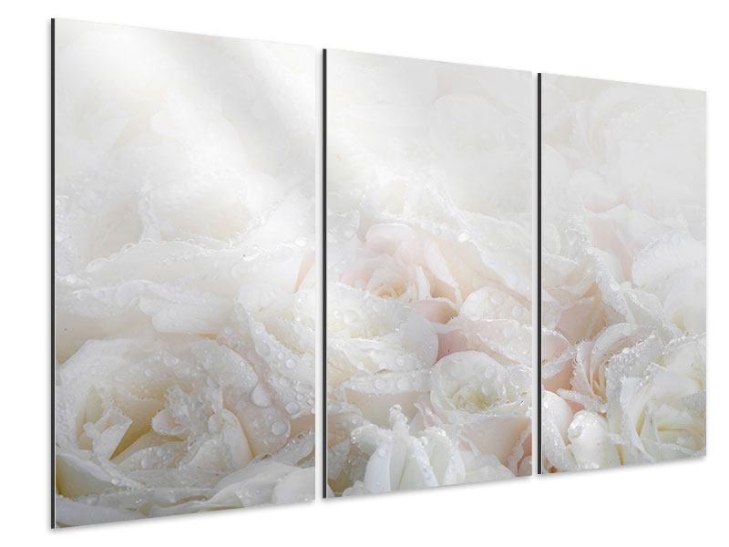 Aluminiumbild 3-teilig Weisse Rosen im Morgentau