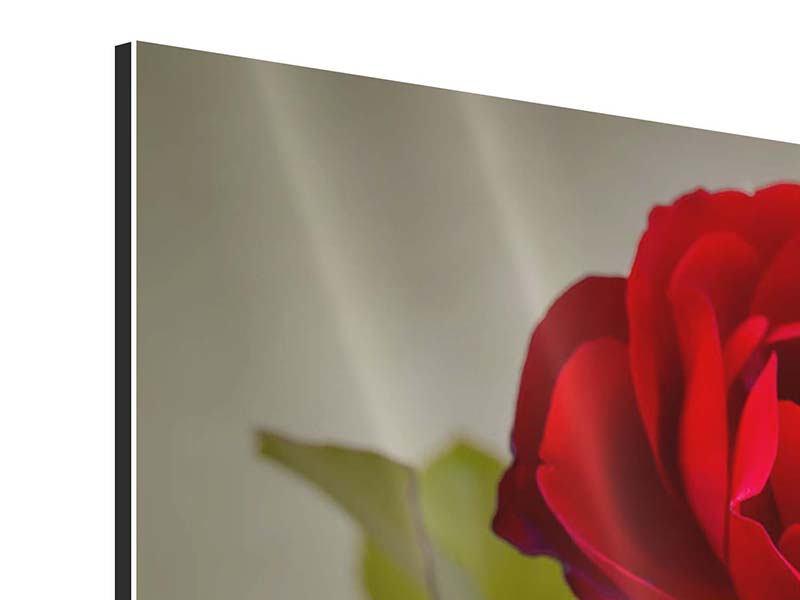 Aluminiumbild 3-teilig Drei rote Rosen