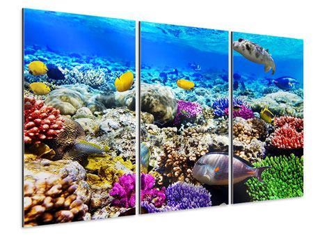 Aluminiumbild 3-teilig Fischaquarium