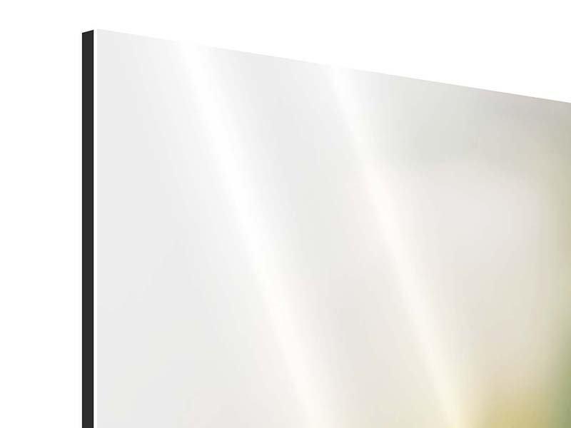 Aluminiumbild 3-teilig Tulpenperspektive