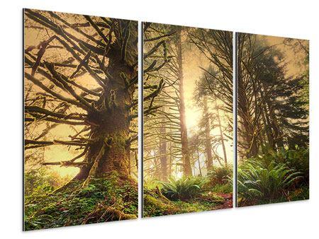 Aluminiumbild 3-teilig Sonnenuntergang im Dschungel