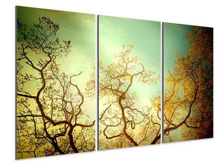 Aluminiumbild 3-teilig Bäume im Herbst