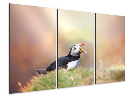 Aluminiumbild 3-teilig Der Papageitaucher