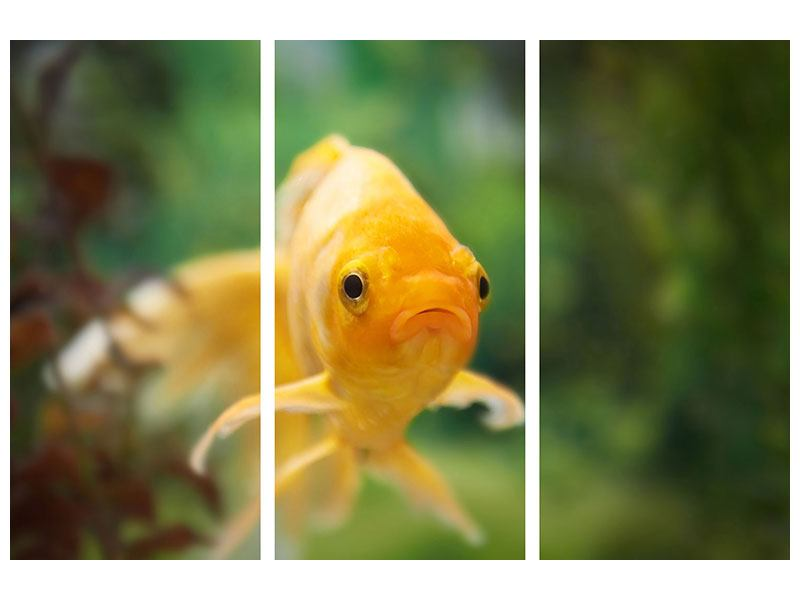 Aluminiumbild 3-teilig Der Fisch