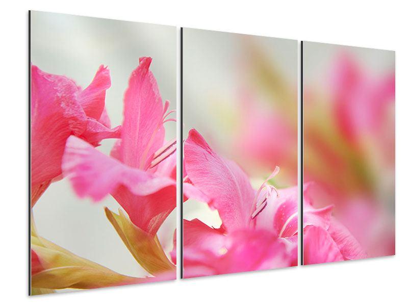 Aluminiumbild 3-teilig Gladiolen
