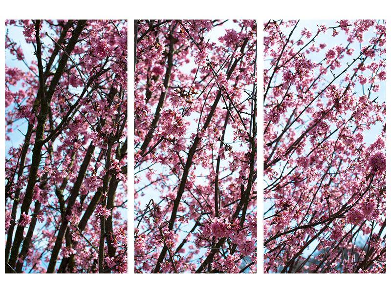 Aluminiumbild 3-teilig Japanische Blütenkirsche
