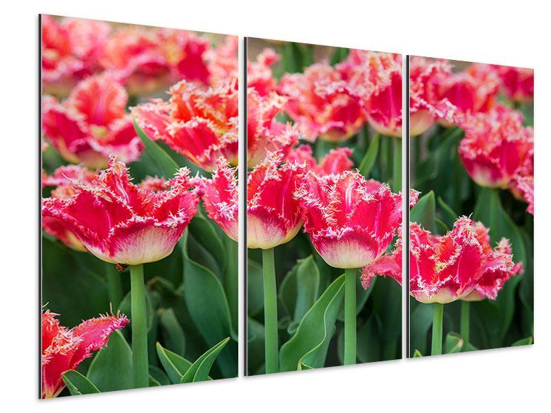 Aluminiumbild 3-teilig Die Tulpenwiese