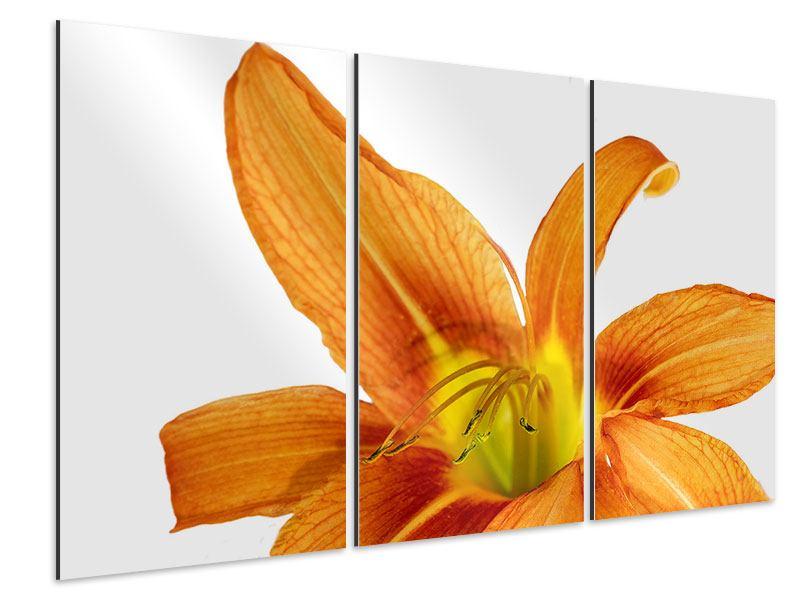 Aluminiumbild 3-teilig Die Tiger-Lilie