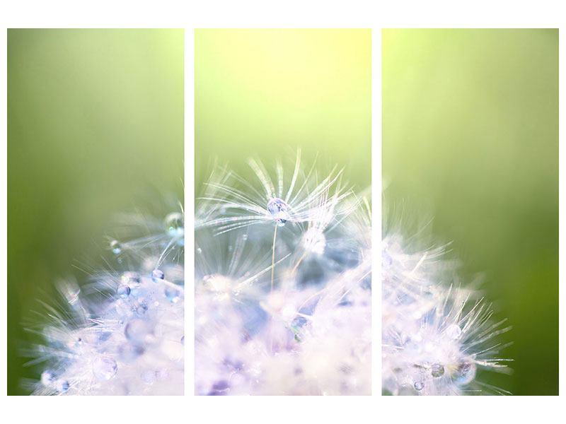 Aluminiumbild 3-teilig Pusteblume XL im Morgentau