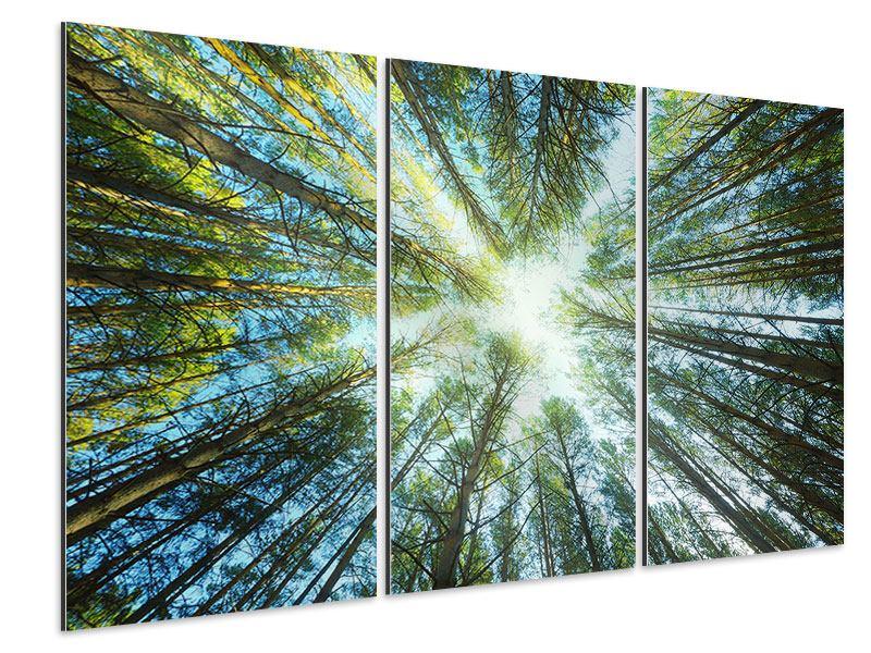 Aluminiumbild 3-teilig Kiefernwald