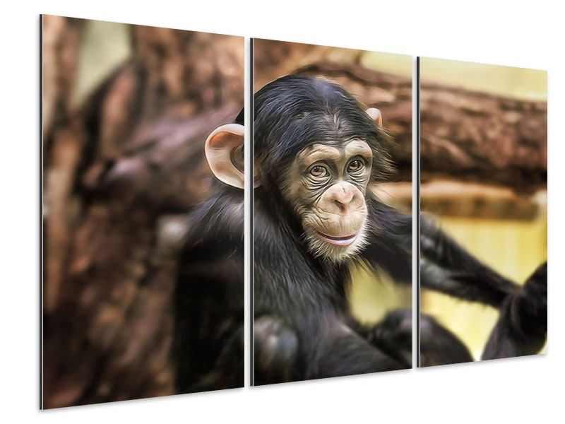 Aluminiumbild 3-teilig Der Schimpanse