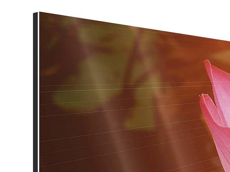 Aluminiumbild 3-teilig Close Up Lotus