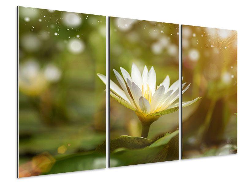 Aluminiumbild 3-teilig Lilien-Lichtspiel