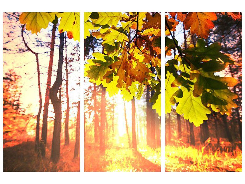 Aluminiumbild 3-teilig Herbst