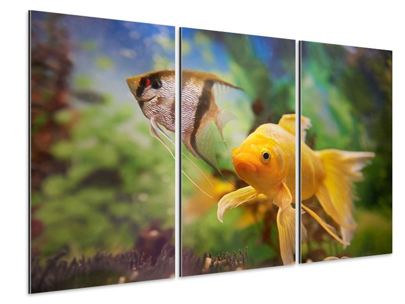 Aluminiumbild 3-teilig Bunte Fische