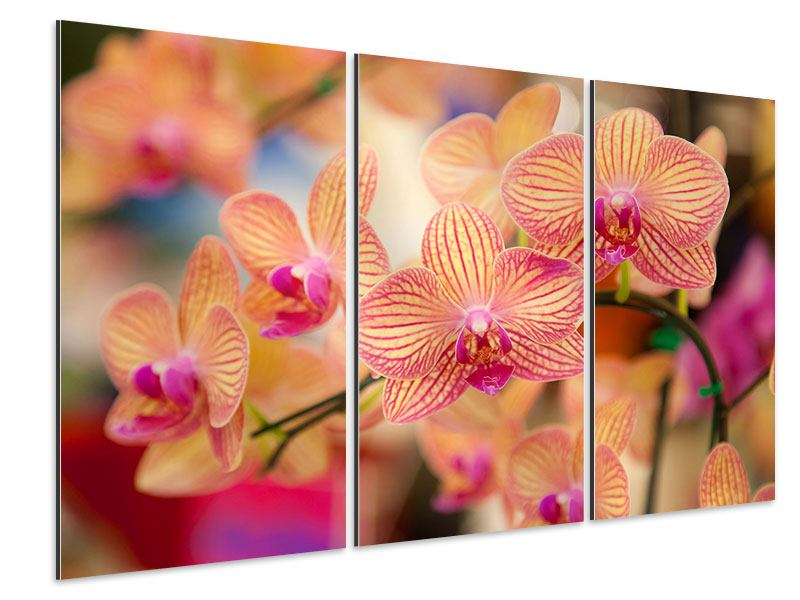 Aluminiumbild 3-teilig Exotische Orchideen