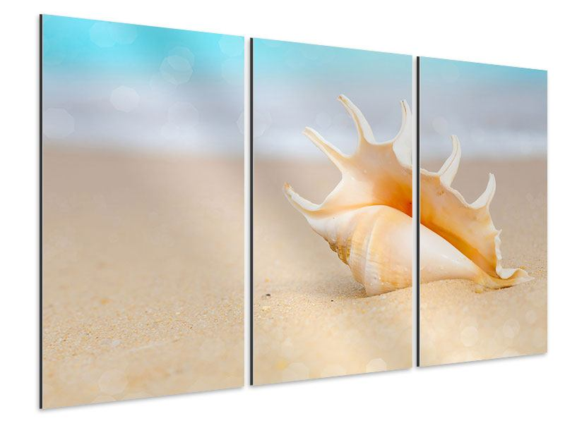 Aluminiumbild 3-teilig Die Muschel am Strand