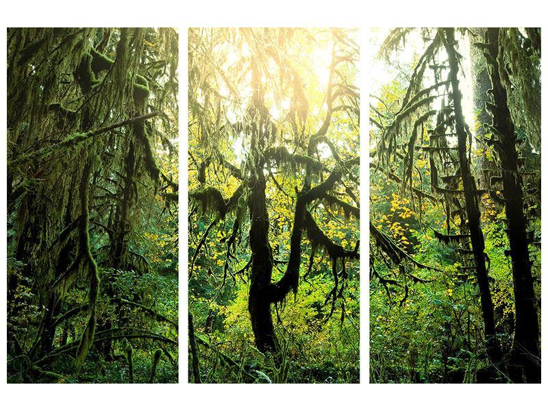 Aluminiumbild 3-teilig Verträumter Wald