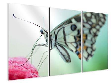Aluminiumbild 3-teilig Schmetterling XXL