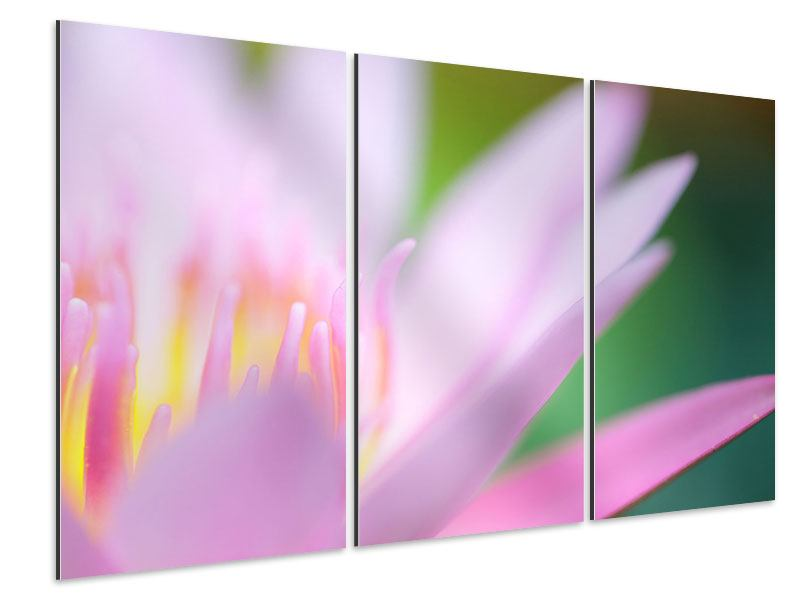 Aluminiumbild 3-teilig XXL-Lilie
