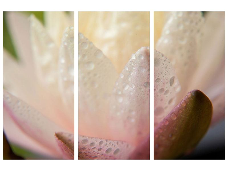 Aluminiumbild 3-teilig Close Up Seerose