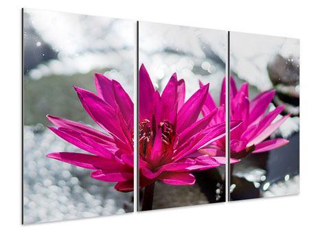 Aluminiumbild 3-teilig Seerosenduo in Pink
