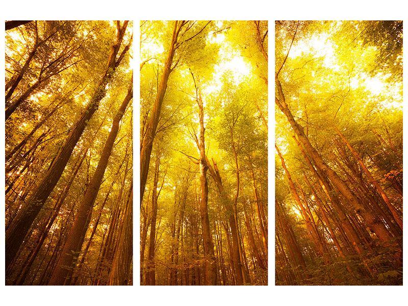 Aluminiumbild 3-teilig Herbstwald