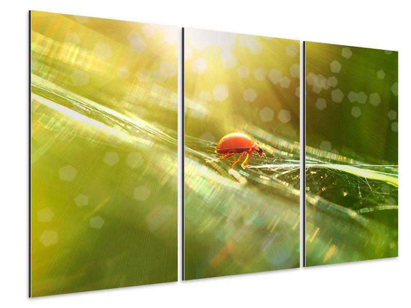 Aluminiumbild 3-teilig Marienkäfer im Sonnenlicht