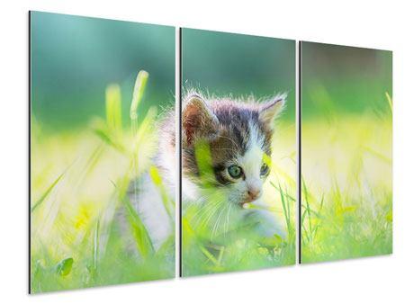 Aluminiumbild 3-teilig Kitten