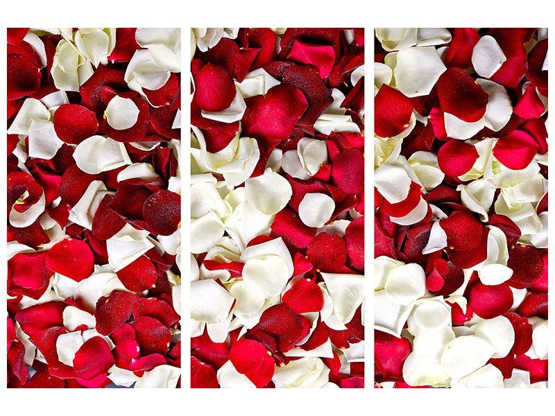 Aluminiumbild 3-teilig Rosenblätter