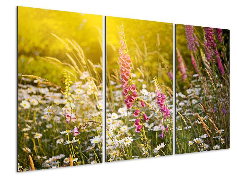 Aluminiumbild 3-teilig Sommerliche Blumenwiese