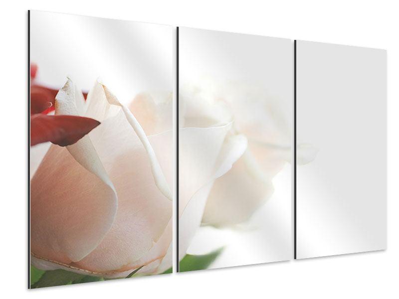 Aluminiumbild 3-teilig Herrliche Rosen