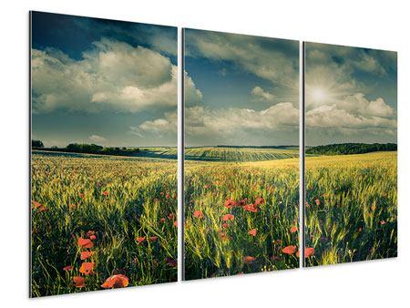 Aluminiumbild 3-teilig Der Mohn im Weizenfeld
