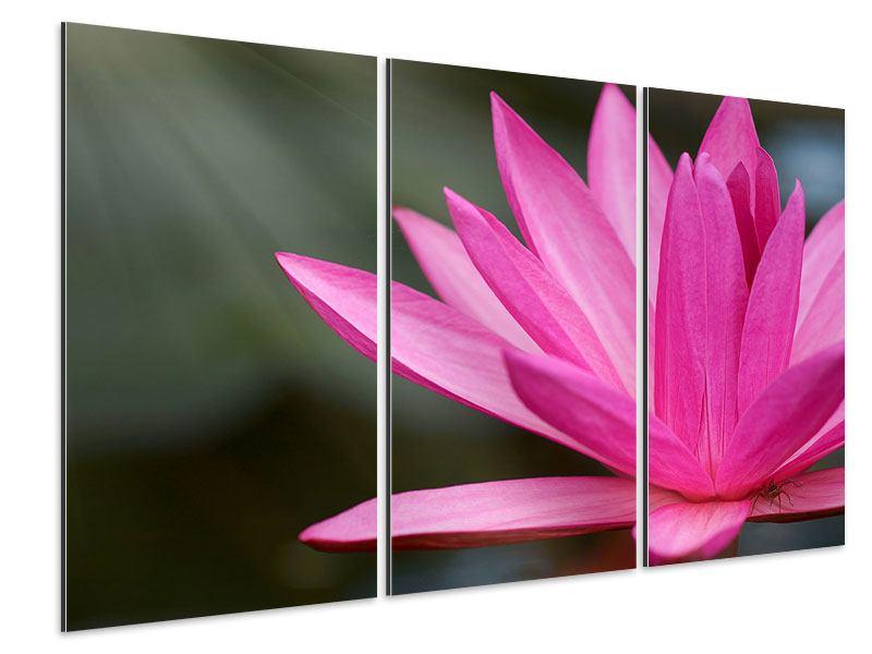 Aluminiumbild 3-teilig XXL Seerose in Pink