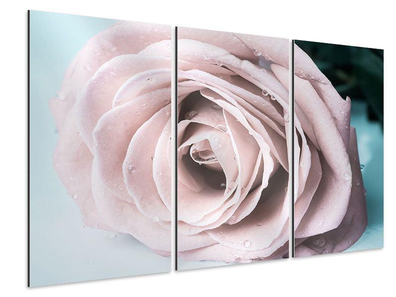 Aluminiumbild 3-teilig Pastellrose