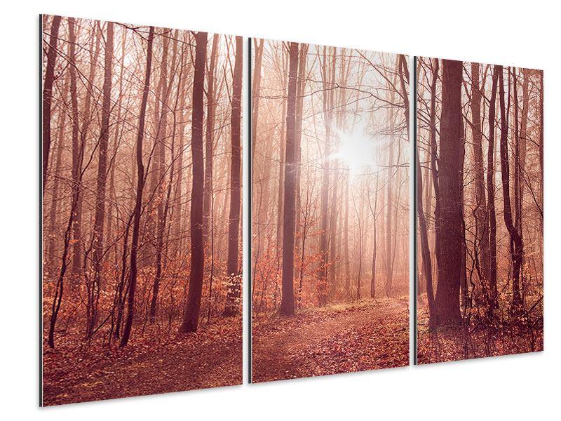 Aluminiumbild 3-teilig Sonnenuntergang im Herbstwald
