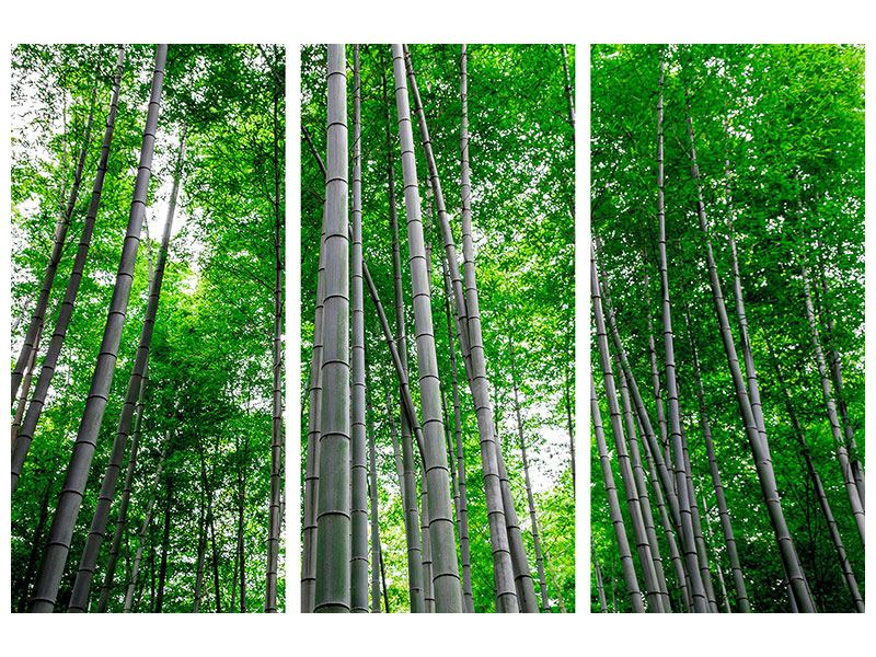 Aluminiumbild 3-teilig Bambuswald