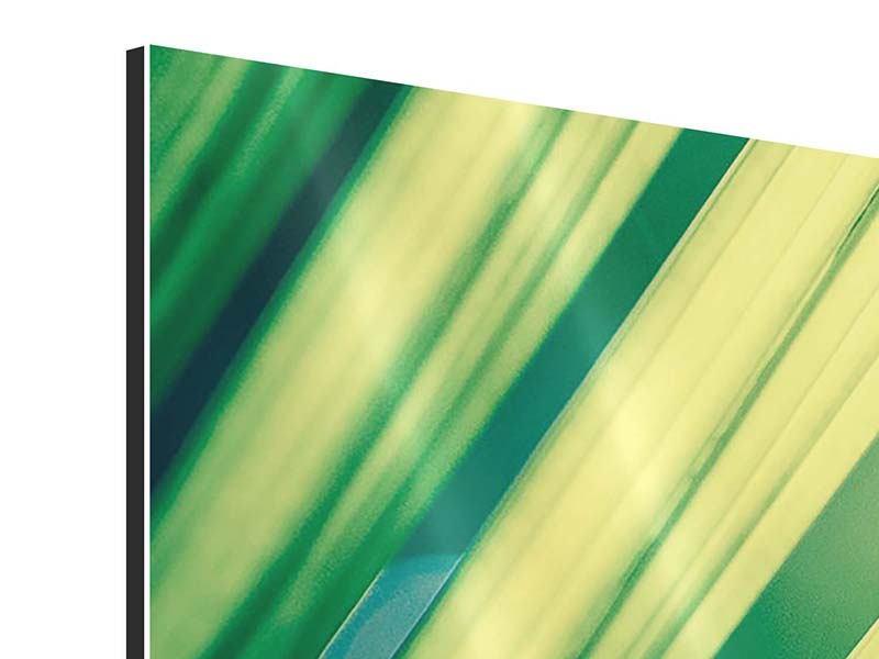 Aluminiumbild 3-teilig Beleuchtetes Palmblatt