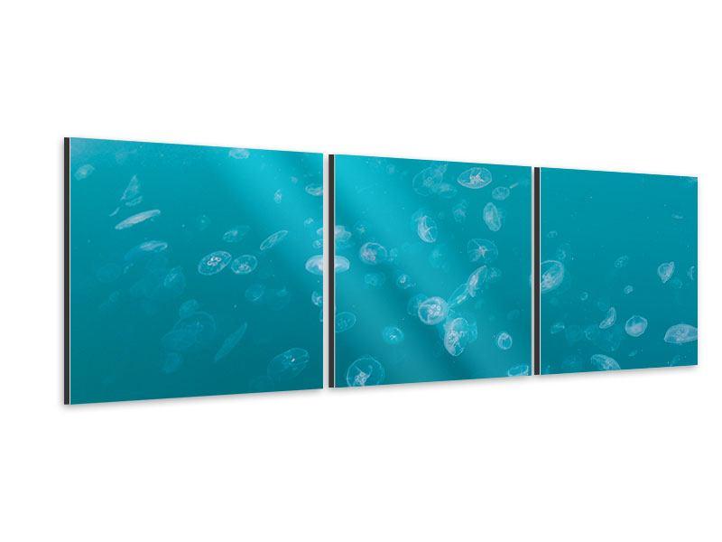 Panorama Aluminiumbild 3-teilig Viele Quallen